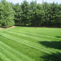 Property & Lawn Maintinance
